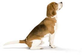 Klik op de hond